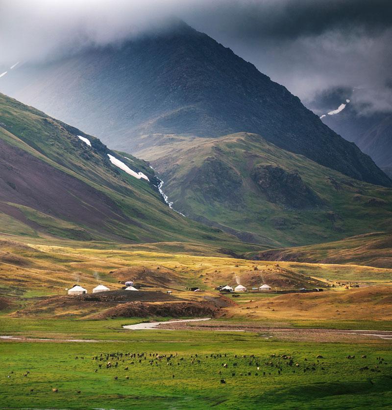 Weidetiere Mongolei
